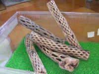 天然サボテンの骨(棒状) 細20cm