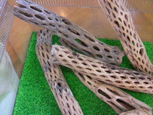 他の写真1: 天然サボテンの骨(棒状) 細20cm