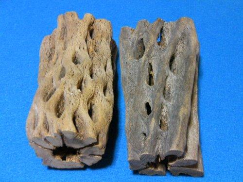 他の写真3: 天然サボテンの骨(棒状) 極太15cm