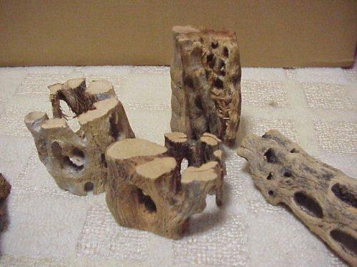 他の写真1: 天然サボテンの骨 バラ