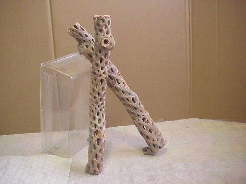 他の写真2: 天然サボテンの骨(棒状) 太50cm