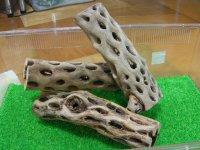 天然サボテンの骨(棒状) 太20cm