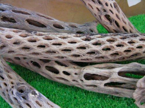 他の写真2: 天然サボテンの骨(棒状) 細20cm