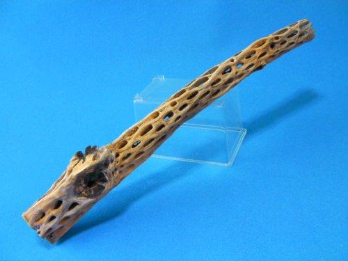 他の写真3: (太65cm)天然サボテンの骨