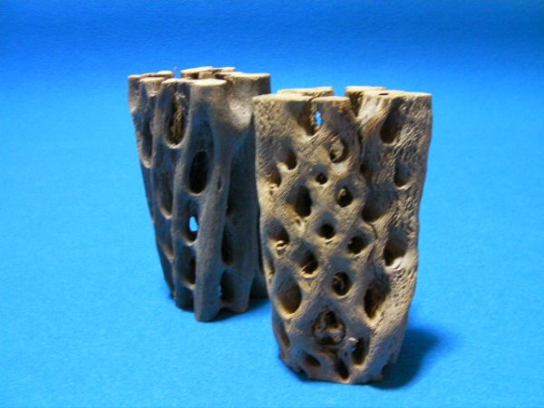 画像1: 天然サボテンの骨(棒状) 極太15cm