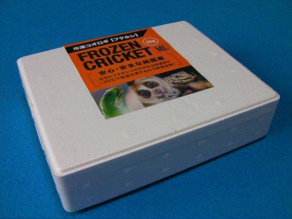 画像2: (ML☓約100匹) 冷凍フタホシコオロギ ML(2〜2.5cm) 50g