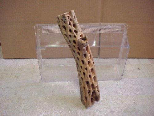 他の写真2: 天然サボテンの骨(棒状) 太30cm