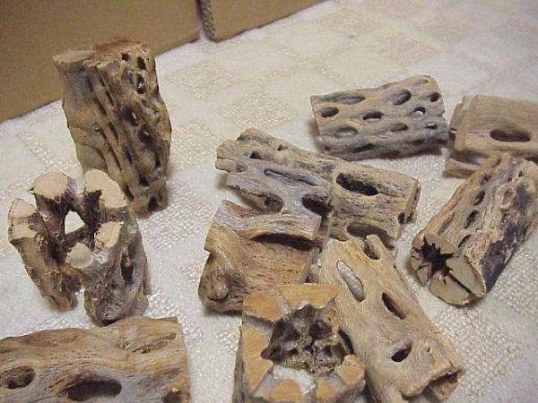 画像1: 天然サボテンの骨 バラ
