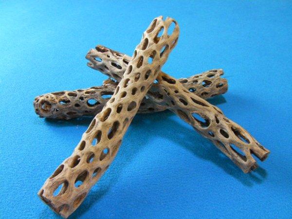 画像1: 天然サボテンの骨(棒状) 細30cm